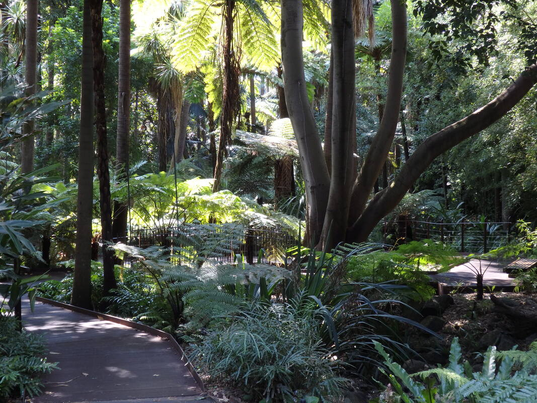 Fern Gully Boardwalk, Royal Botanic Gardens Melbourne
